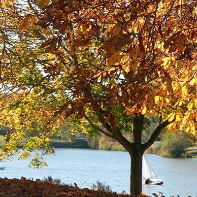 Jeder, Der Einen Baum In Seinem Unmittelbaren Wohnumfeld, Zum Beispiel Im  Garten Hat, Kennt Die Vorzüge. Mit Seiner Ausdrucksstärke Verleiht Er Dem  Garten ...
